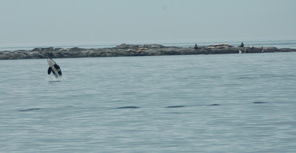 orca-breach