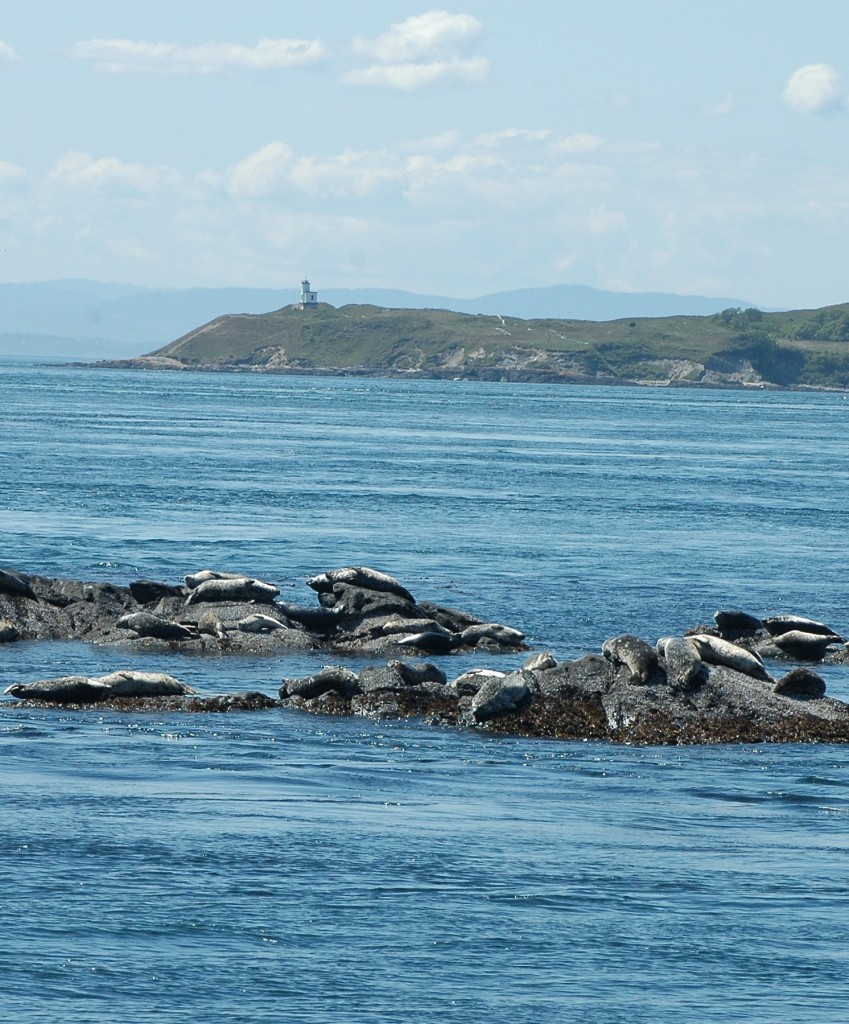 seals-with-lighhouse