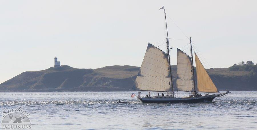 Sailing by Cattle Point, San Juan Island